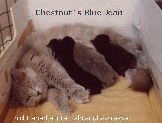 Chestnut�s Blue Jean