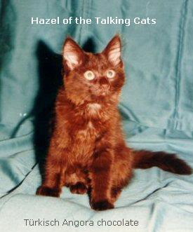 Hazel of the Talking Cats